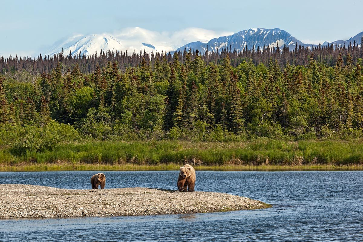 Katmai National Park & Preserve bears