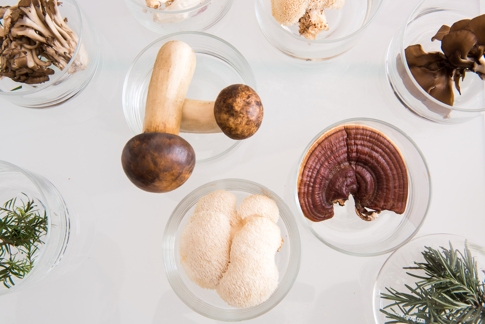Shroomin' Marvelous - Why Mushrooms Are An Underrated Superfood