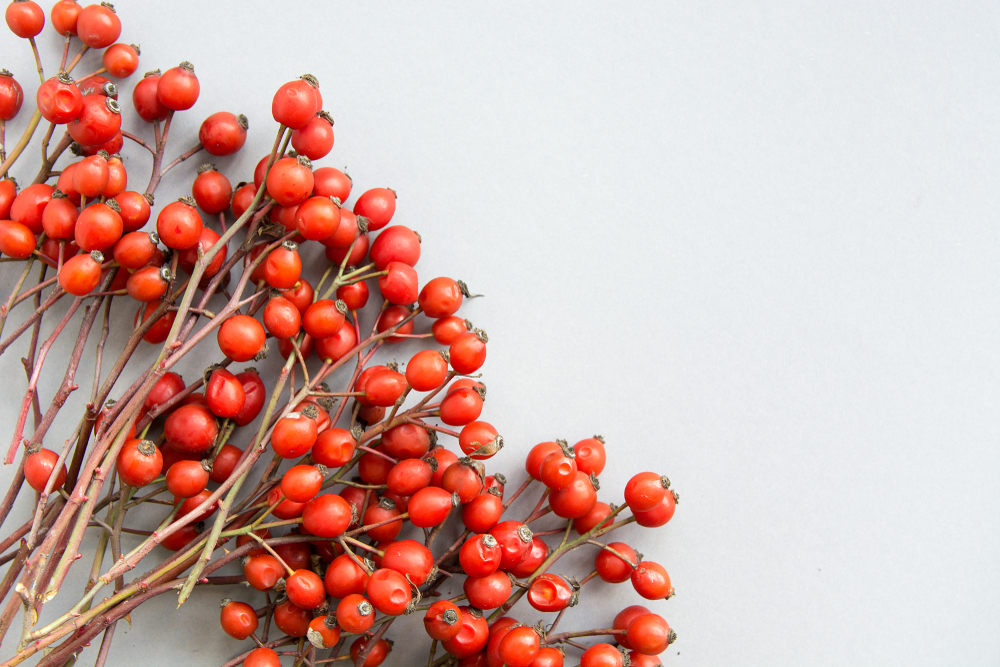 How Rosehip Oil Saved My Skin